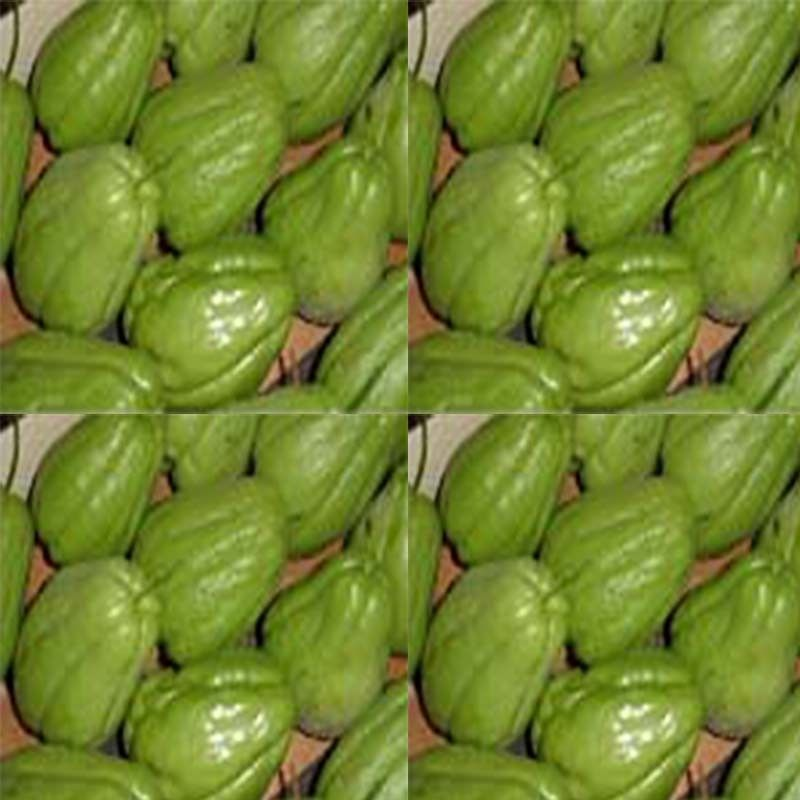 Christophine - Chayote
