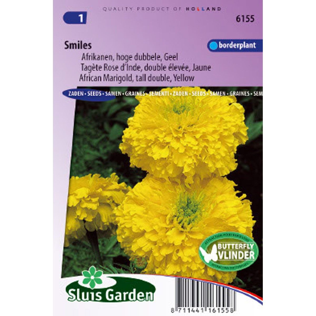 Rose d'Inde Smiles - Tagetes erecta