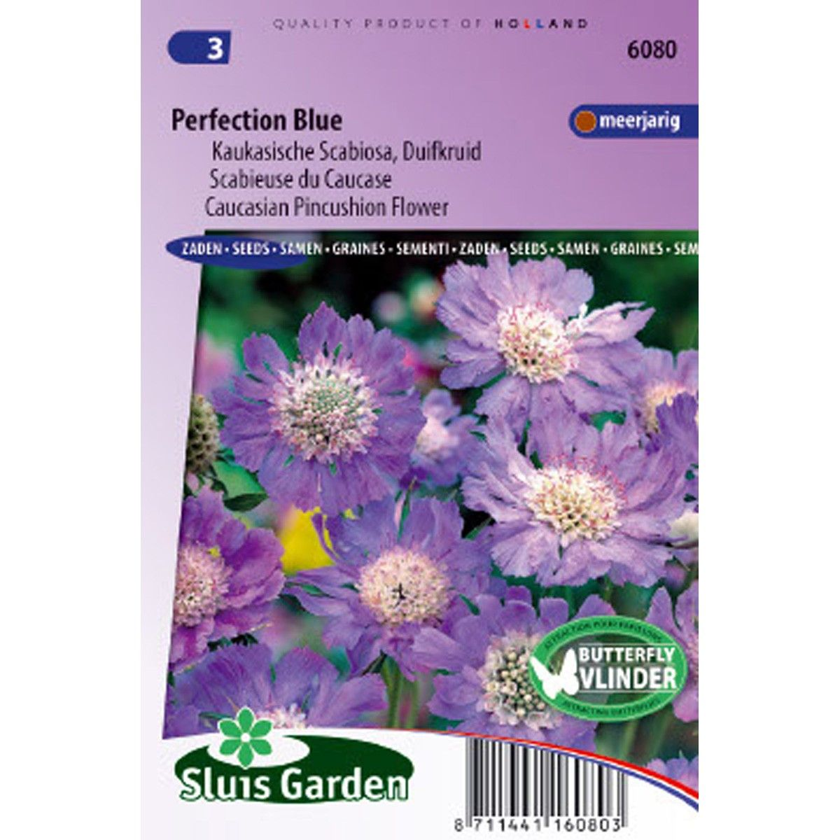 Scabieuse du Caucase Perfection Blue - Scabiosa caucasica