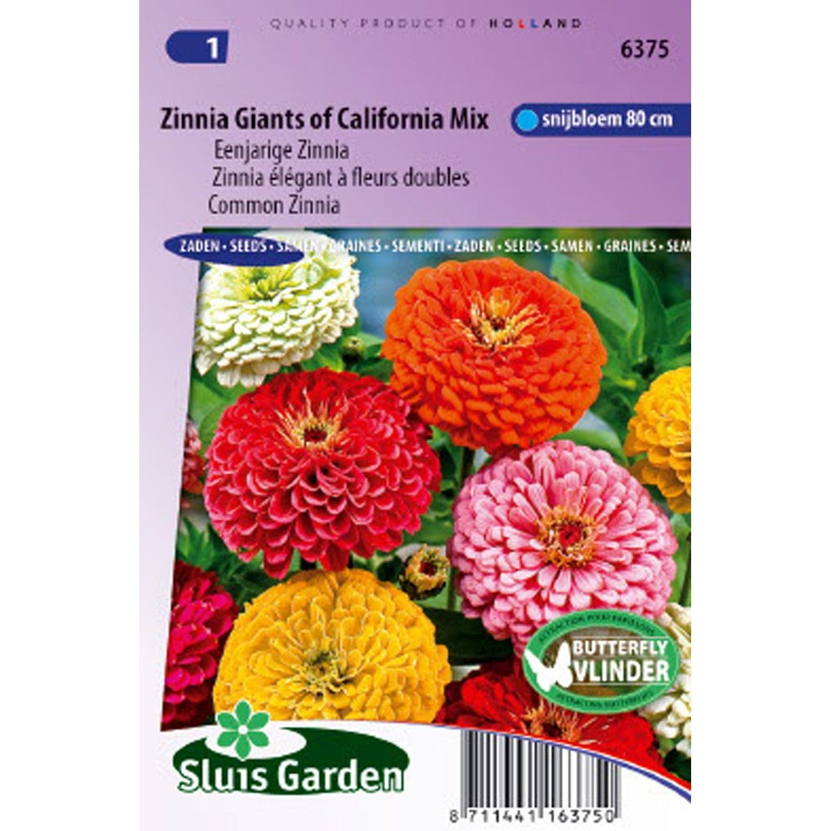 Zinnia Géant de Californie en mélange - Zinnia elegans Giant of California Mix