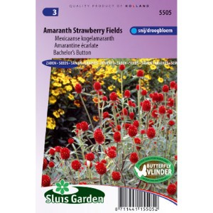 Graine de Gomphrena haageana - Amarantine Strawberry Fields