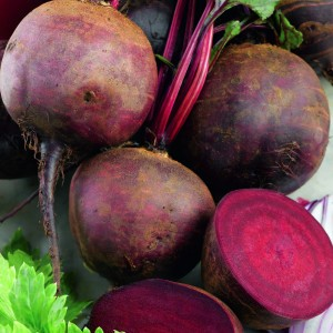 Betterave rouge Boltardy - Beta vulgaris