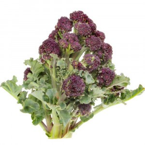 Chou Brocoli Early Purple Sprouting Bio - Ferme de Sainte Marthe