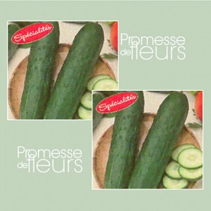 Concombre Dasher F1 - Cucumis sativus