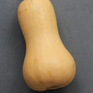 Courge Butternut Hunter