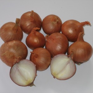 Echalote Red Sun - Allium cepa - Sac de 500gr