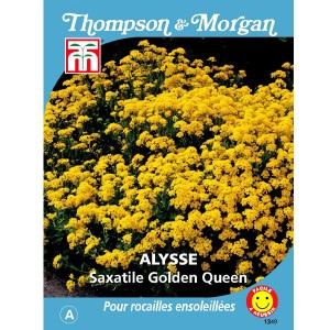 Graines d'Alysse saxatile Golden Queen - Corbeille d'Or
