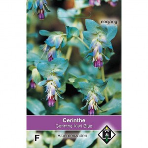 Graines de Cerinthe major Purpurascens Kiwi Blue