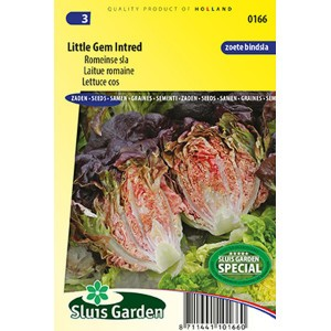 Laitue Romaine Little Gem Intred