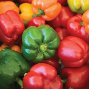 Poivron Summer Salad Mixed - Capsicum annuum