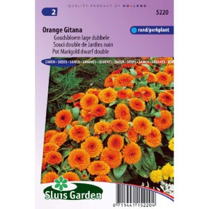 Souci de Jardin nain Orange Gitana - Calendula officinalis