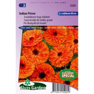 Souci double de Jardin Indian Prince - Calendula officinalis