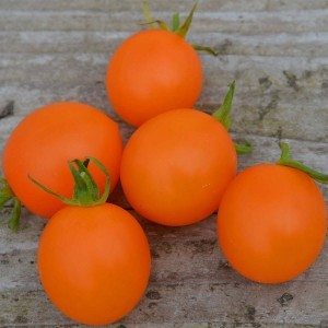 Tomate Orange Berry Bio - Ferme de Sainte Marthe