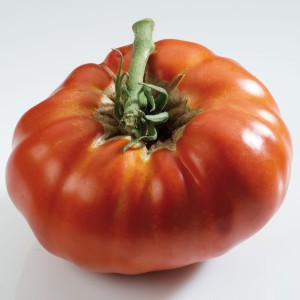 Tomate Russe rouge - Tomate ancienne - Plants de tomate