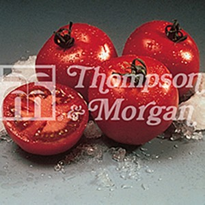 Tomate Cristal F1 - Tomate Grappe