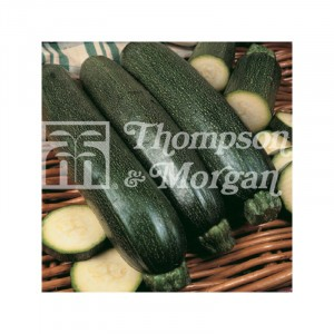 Courgette Midnight F1