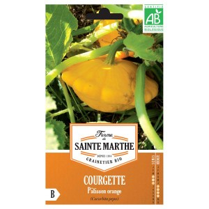 Courgette Pâtisson Orange AB - Ferme de Sainte Marthe