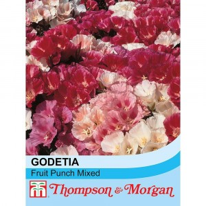 Graines de Godétia Fruit Punch mixed - Clarkia nain en mélange