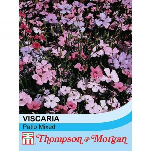 Graines de Viscaria oculata Patio mixed