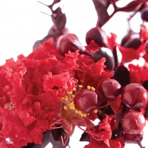 Lagerstroemia indica Black Solitaire Crimson Red - Lilas des Indes
