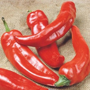 Piment Anaheim Chili - Piment doux de Californie