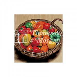 Piment Tropical Heat - Capsicum annuum