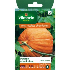 Potiron Atlantic Giant (fruits énormes) - Vilmorin