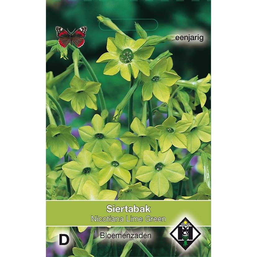 Graines de Nicotiana Lime Green - Tabac d'ornement.