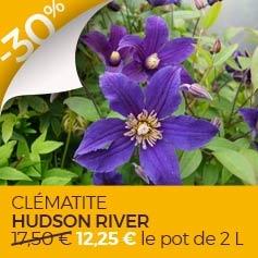 clematite-hudson-river-clematis-diversifolia