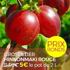 GROSEILLIER_A_MAQUEREAUX_HINNONMAKI_ROUGE