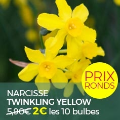 Narcisse_Twinkling_Yellow
