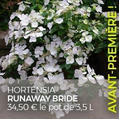 hortensia-hydrangea-macrophylla/hortensia-hydrangea-runaway-bride-snow-white