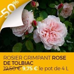 Rose_Tolbiac