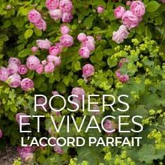 plantes vivaces fleurs violettes mauves pourpres. Black Bedroom Furniture Sets. Home Design Ideas