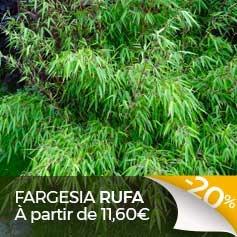 Fargesia-Rufa