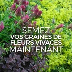 graines-de-fleurs-vivaces