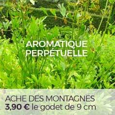 Ache_des_montagnes