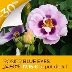 Rosier_Blue_Eyes
