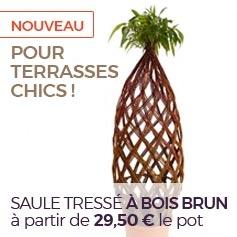 saule_tresse_bois_brun