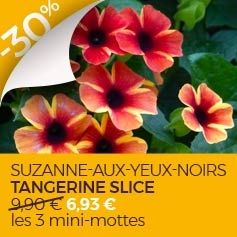 Suzanne-aux-yeux-noirs Tangerine Slice