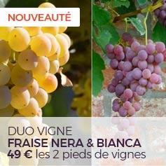Duo Vigne Fraise Nera & Bianca